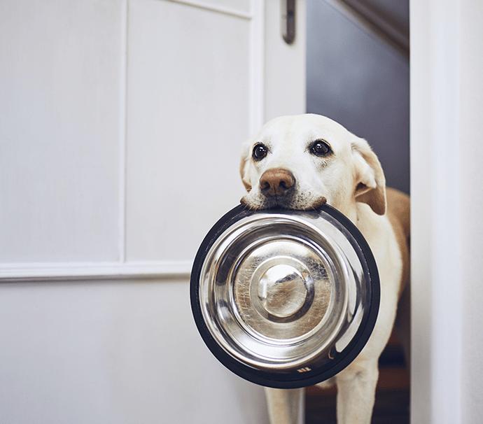 Futterspende für bedürftiger Tiere