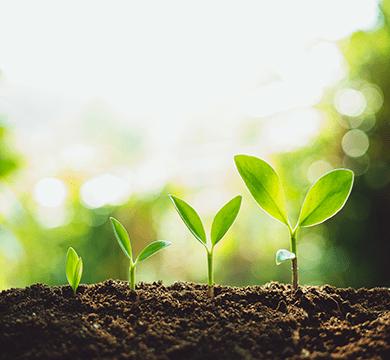 Trendmarke pflanzt für jedes neue Projekt einen Baum